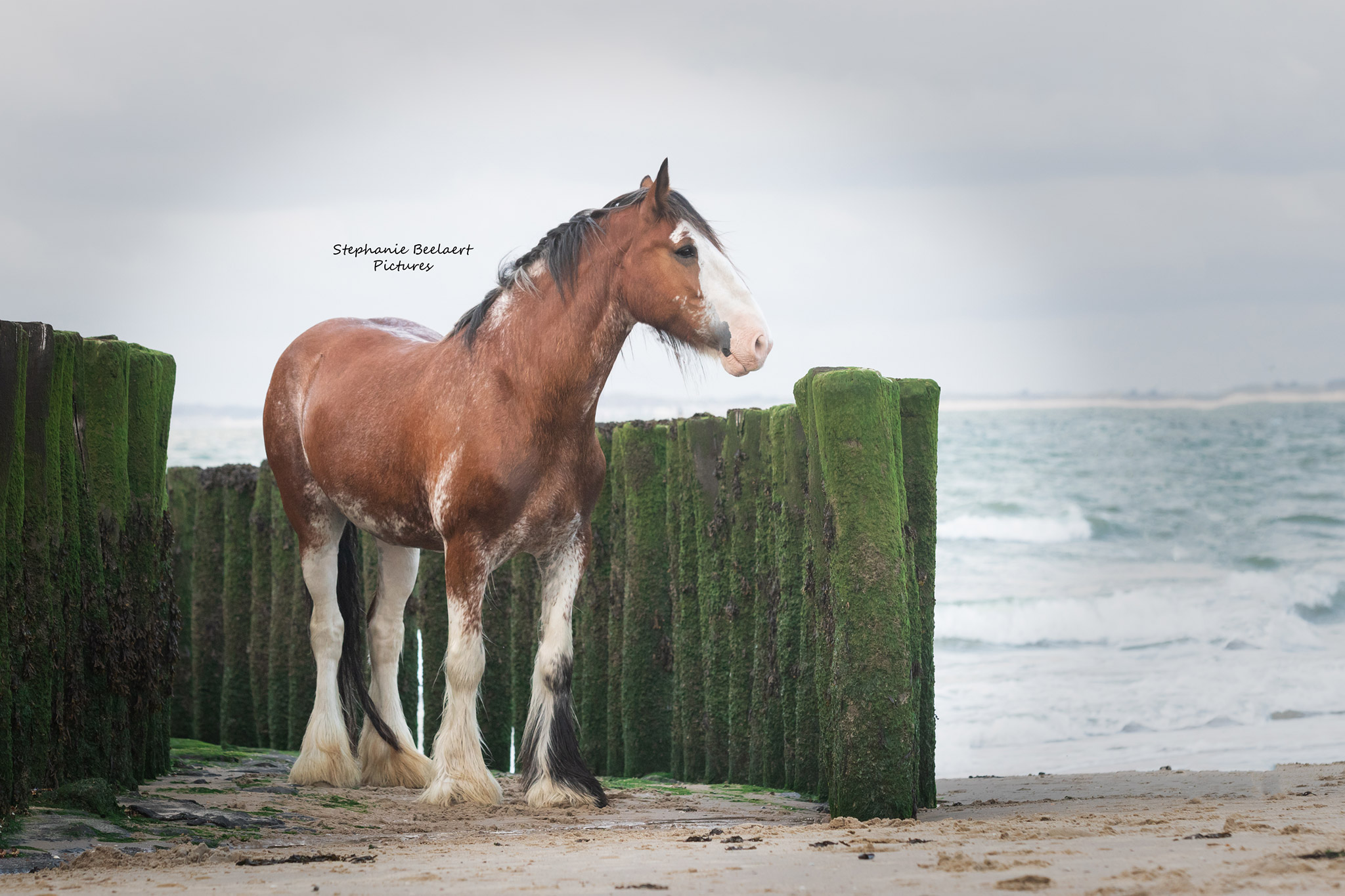Paardenfotografie 1