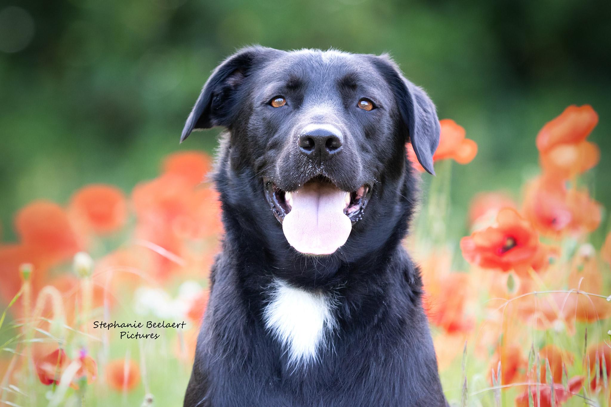 Hondenfotografie 12
