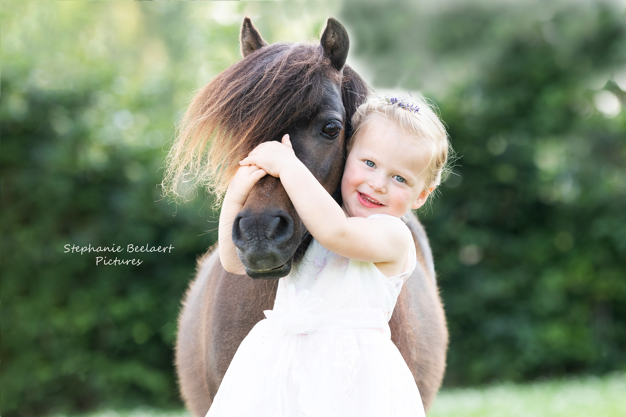 Paardenfotografie 12