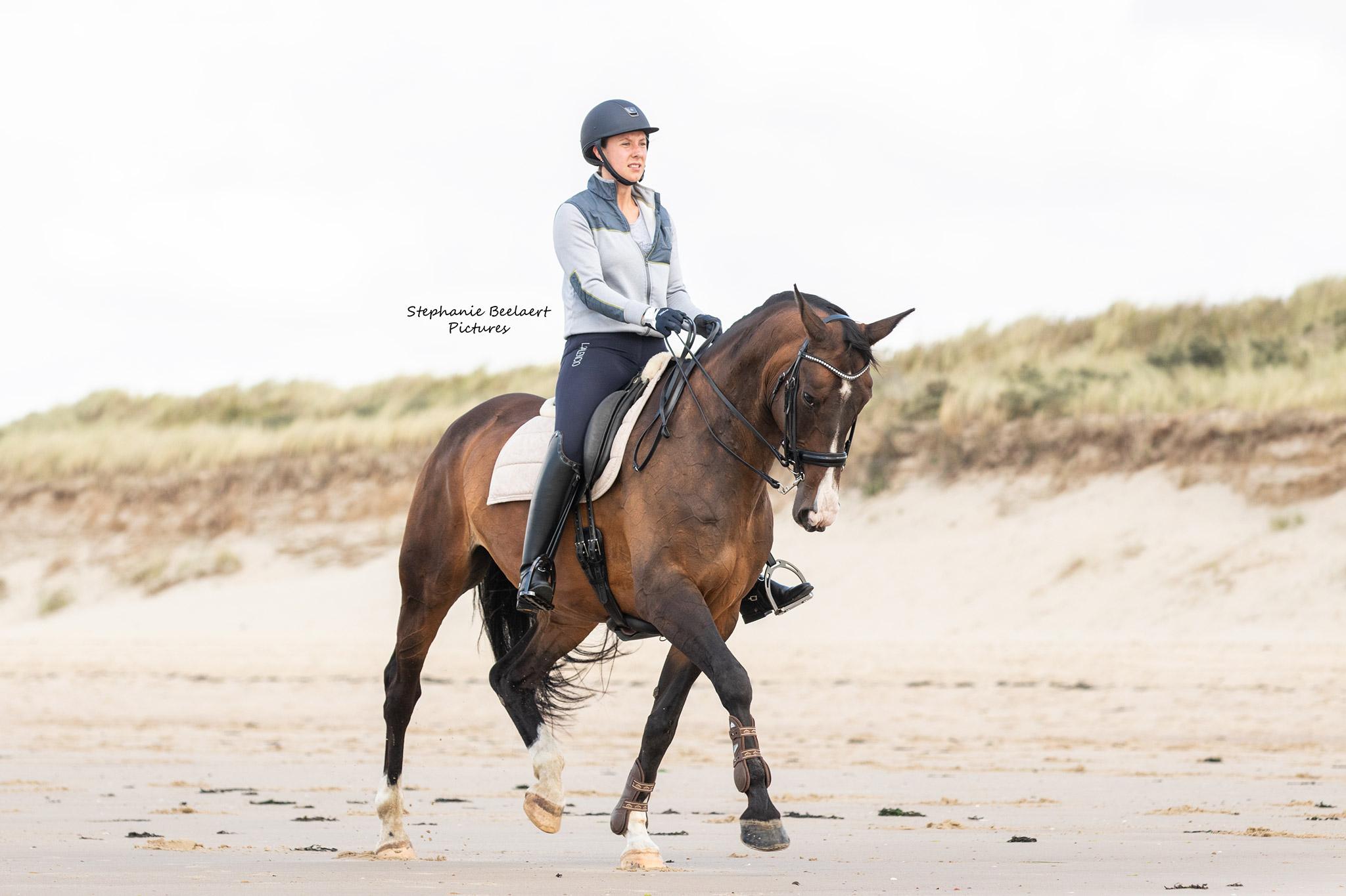 Paardenfotografie 10