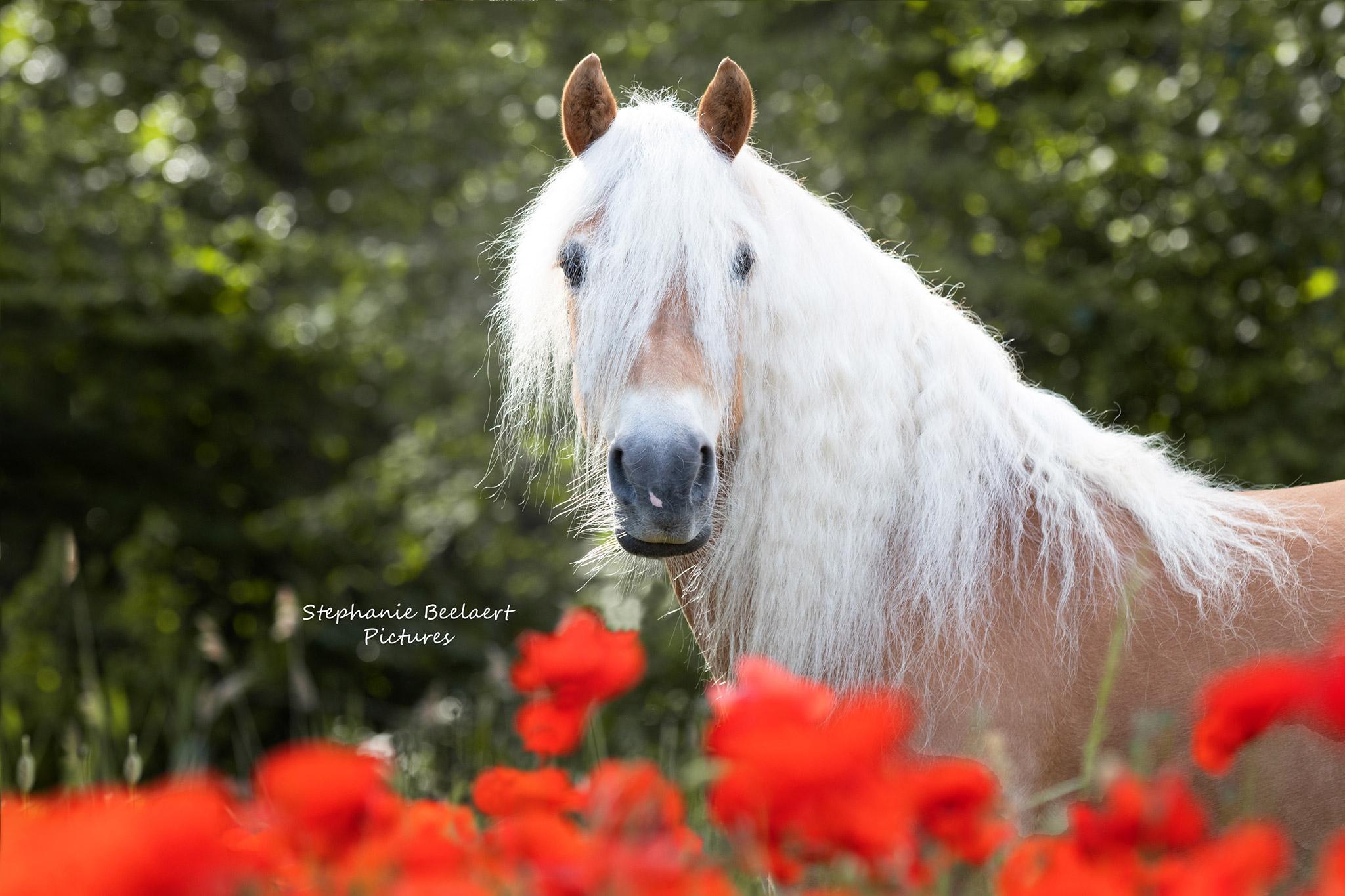 Paardenfotografie 9