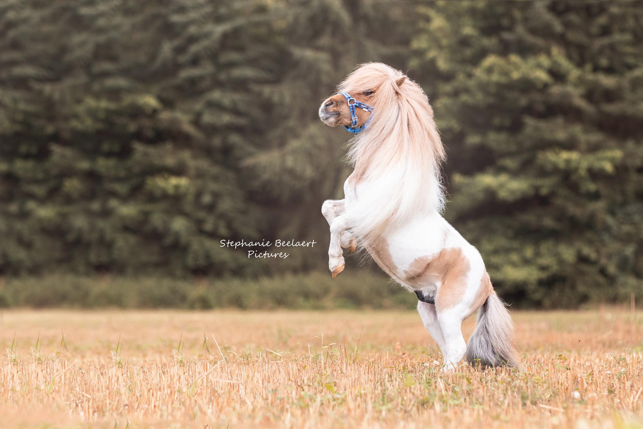 Paardenfotografie 5