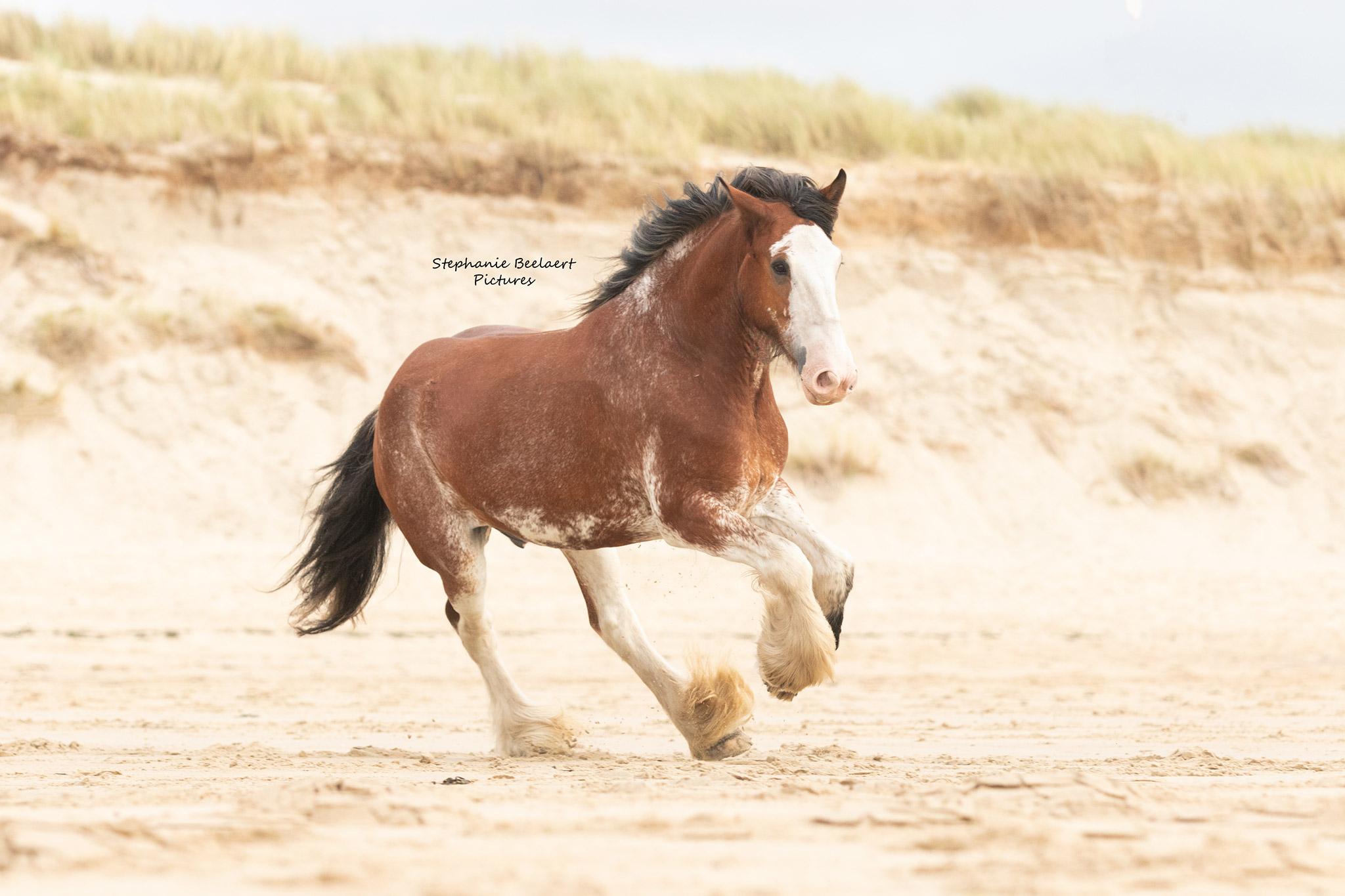Paardenfotografie 4