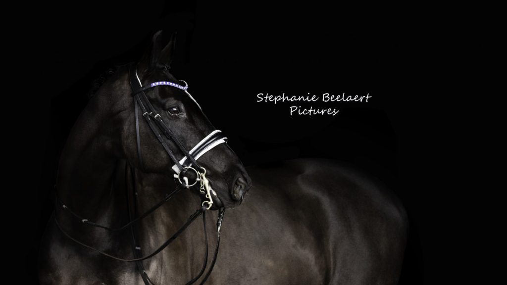 Paardenfoto
