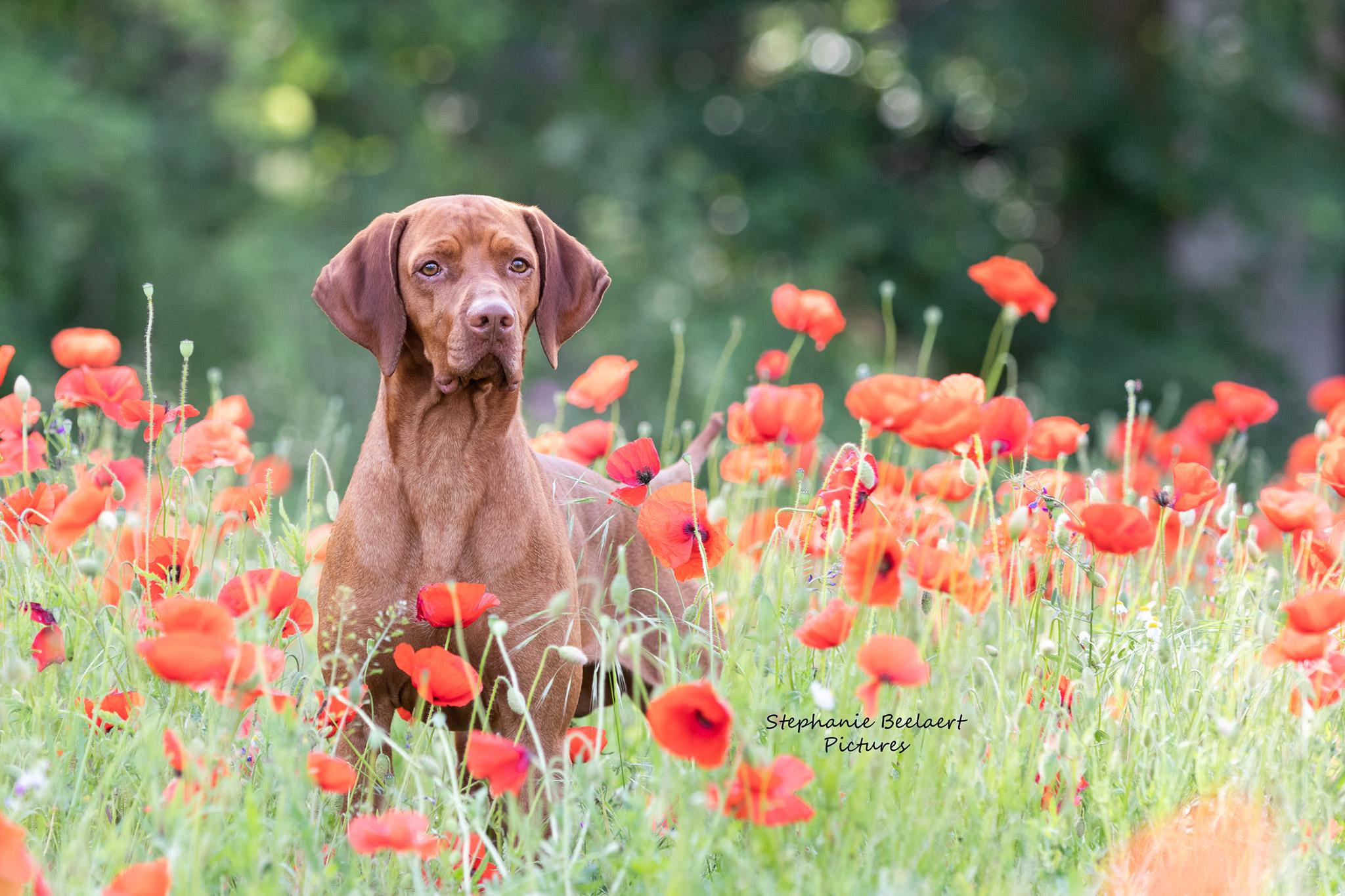 Hondenfotografie 6