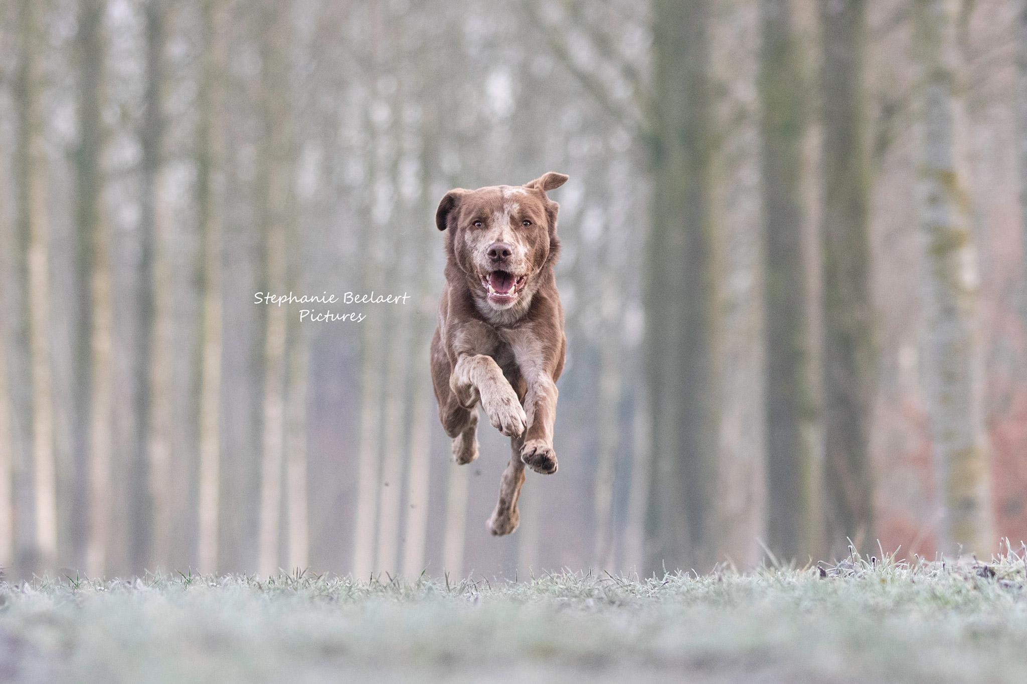 Hondenfotografie 4