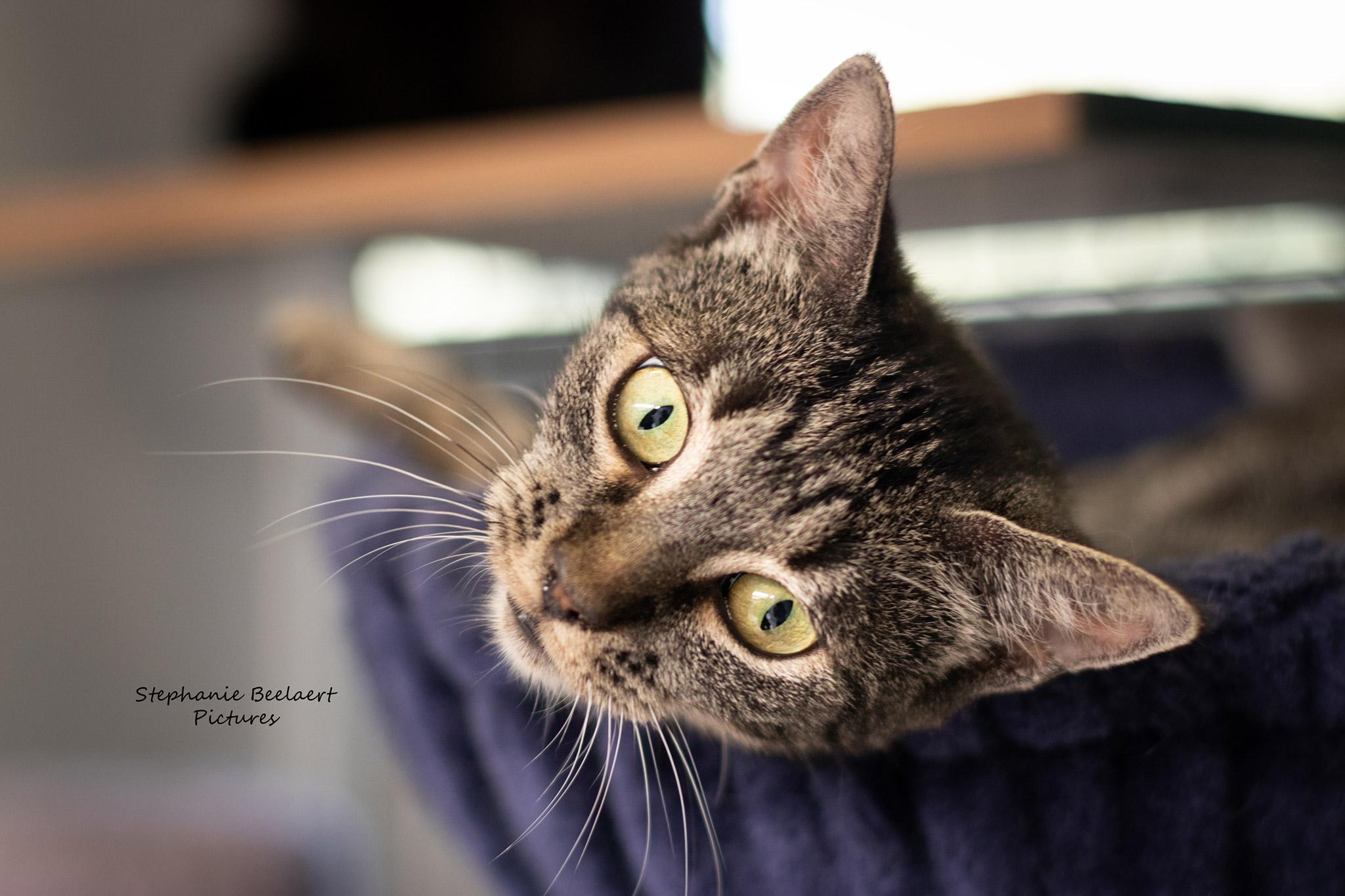 Kattenfotografie 2